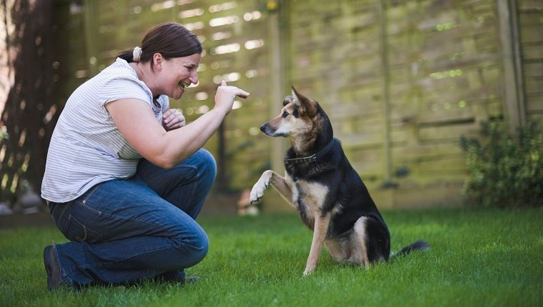 Well trained dog responding to owners hand signal by lifting paw