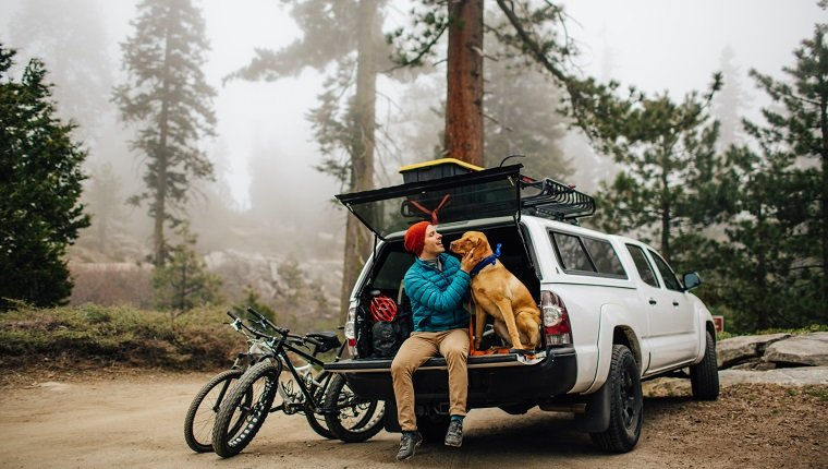 Man and dog sitting on tailgate of off road vehicle, Sequoia National Park, California, USA