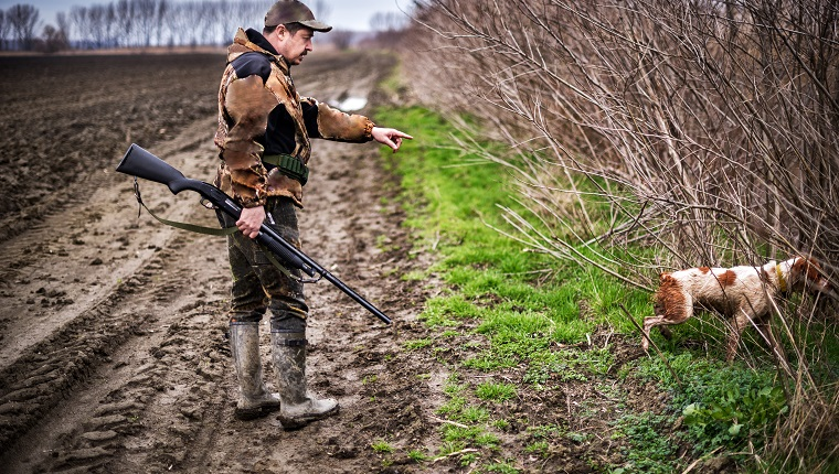 Male hunter with rifle and hunting dog stalking for a prey in the field.