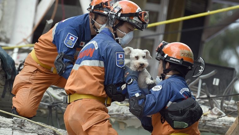 A schnauzer dog who survived the quake is pulled out of the rubble from a flattened building by rescuers in Mexico City on September 24, 2017. Hopes of finding more survivors after Mexico City's devastating quake dwindled to virtually nothing on Sunday, five days after the 7.1 tremor rocked the heart of the mega-city, toppling dozens of buildings and killing more than 300 people. / AFP PHOTO / ALFREDO ESTRELLA (Photo credit should read ALFREDO ESTRELLA/AFP/Getty Images)