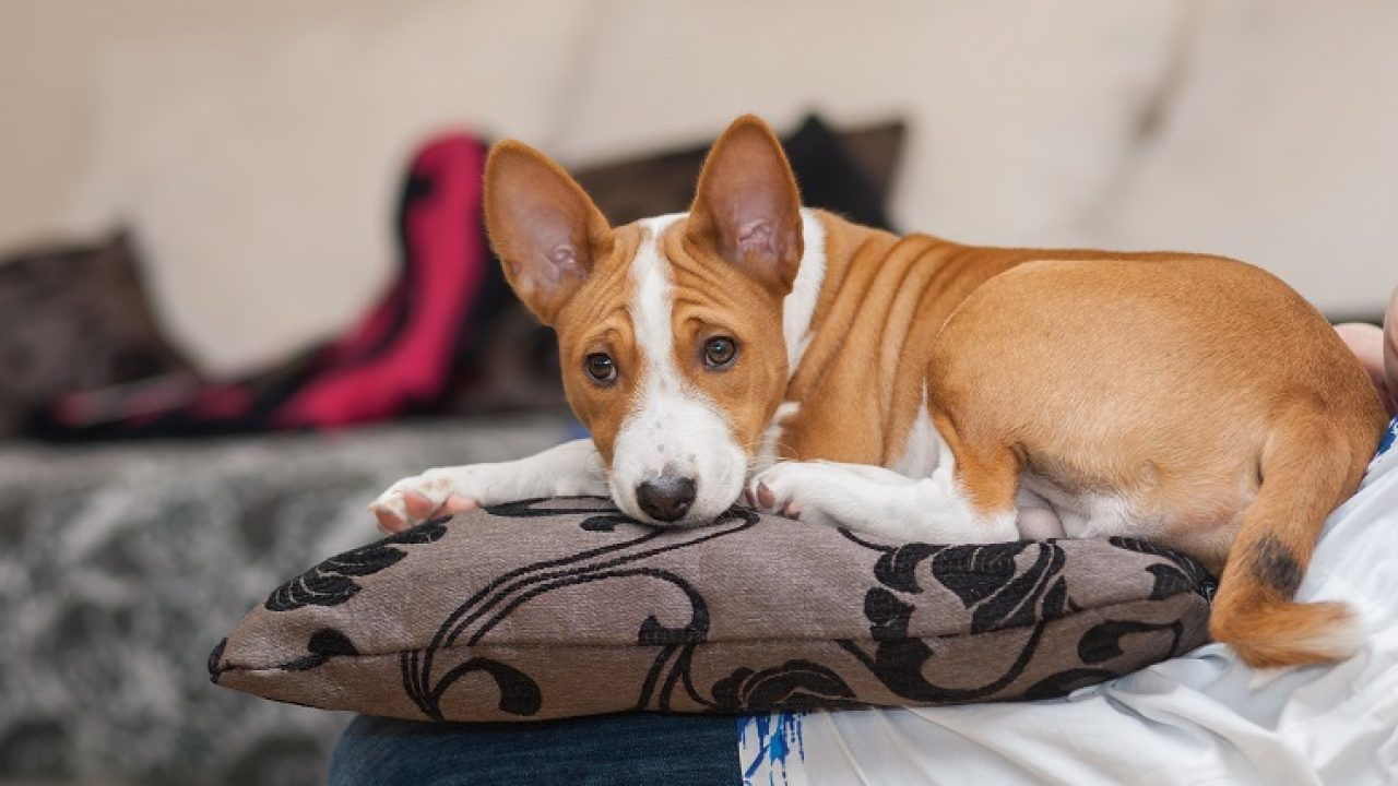29 Best Apartment Dogs for Small Spaces - Dogtime
