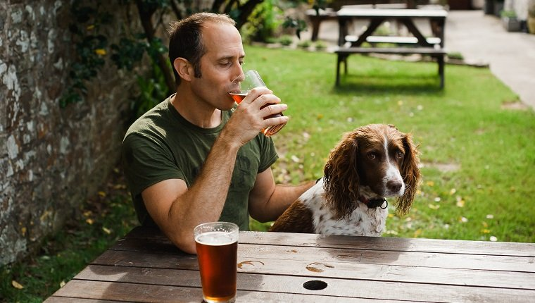 Man sitting in pub garden with Spaniel dog drinking pint of beer.