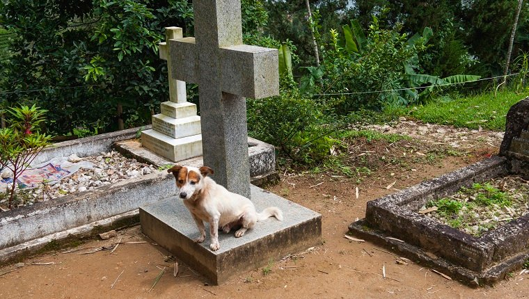 Dog resting on a grave at the Christ church Warleigh, Built during the colonial era in 1878, Dickoya