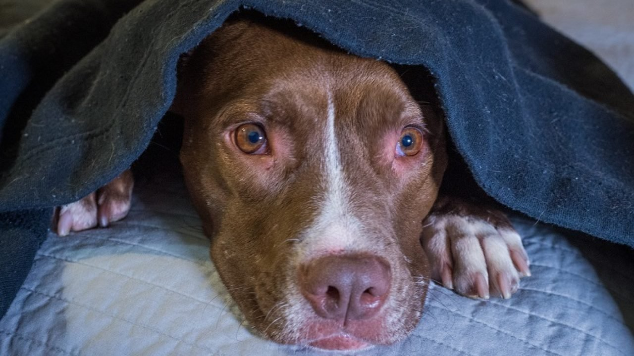 Noise Anxiety In Dogs: Symptoms, Causes, & 5 Ways To Treat It - DogTime