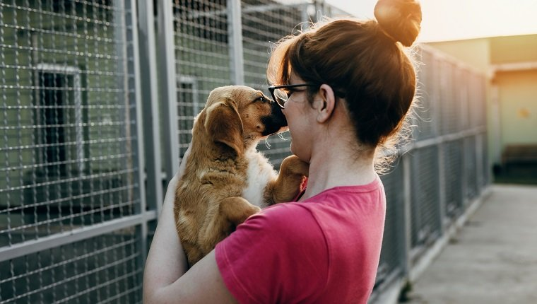 Young woman adopting dog from a shelter.