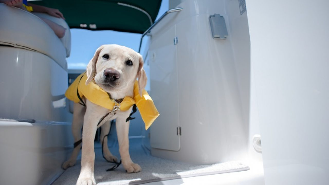 Going Boating With Your Dog? Follow These Safety Tips - DogTime
