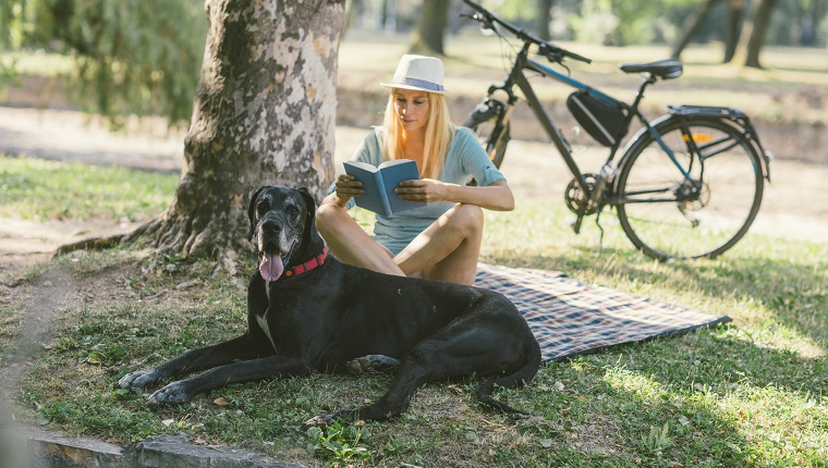 Mid adult woman enjoying the summer day with her dog, great dane, in the park. They are sitting on blanket and woman is reading book.