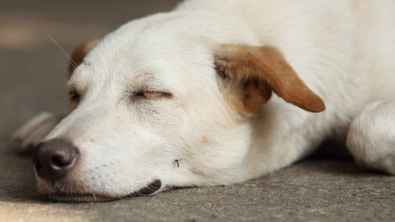 How To Keep Your Dog Safe From Mosquitoes This Summer - Dogtime