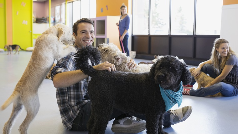 Man playing with dogs at dog daycare