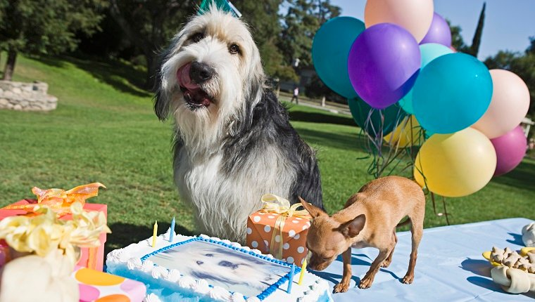 Dogs with birthday cake