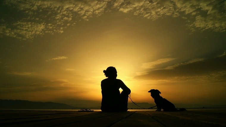 Rear View Of Silhouette Woman With Dog Relaxing On Pier In Front Sea At Sunset