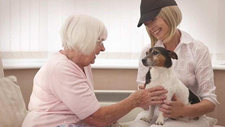 therapy dog community care