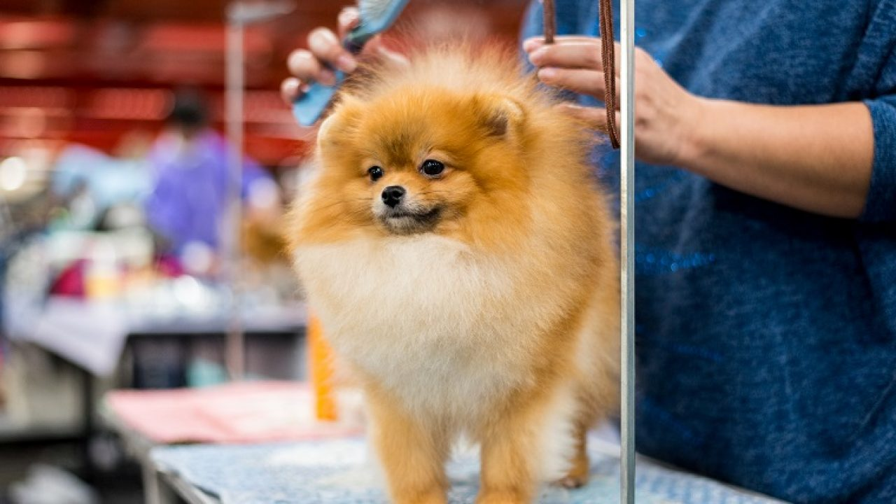 Dogs 101 Everything You Should Know About Brushing Your Dog Dogtime