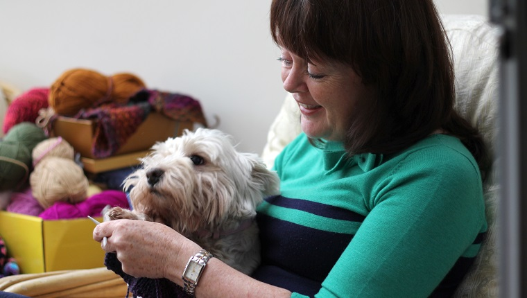 Mature woman sits in a sun room, knitting, and is interrupted by her pet dog, a white West Highland terrier. She is surrounded by yarn wool of many colours. She laughs at the dog's attempts to get attention. Trust, love, companionship, traditional craft.