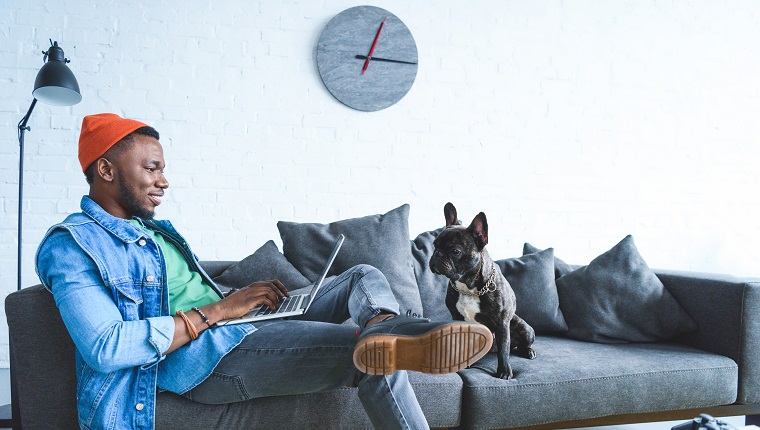 Frenchie dog by owner african american man working on laptop