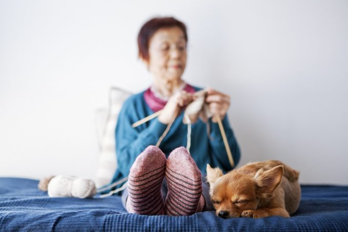 knit for dogs getty images