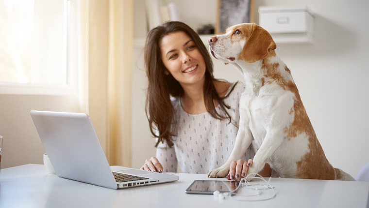 Woman playing with dog at home office