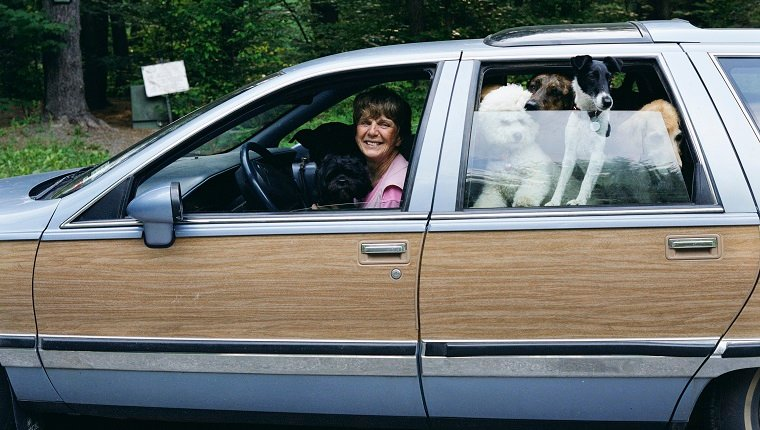 Woman driving car with dogs, smiling, side view