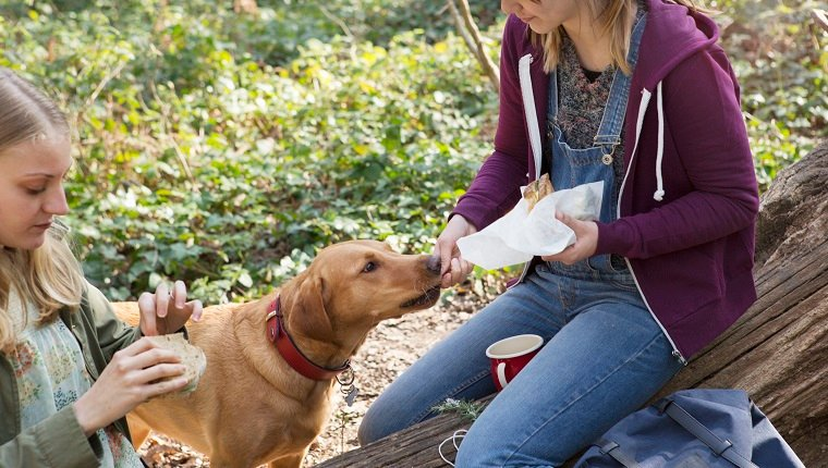 Woman gives her dog a piece of her sandwich.