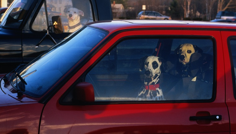 Dogs waiting in cars, looking through windows