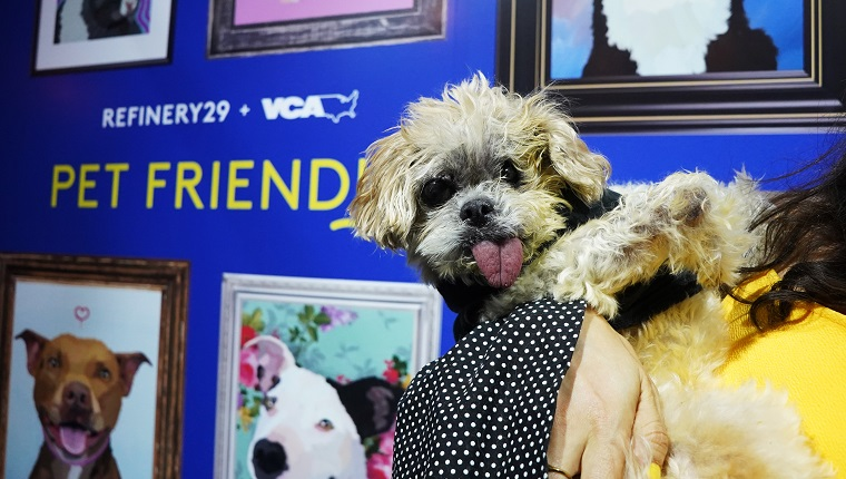 LOS ANGELES, CALIFORNIA - JULY 25: Marnie the Dog attends Refinery29 And VCA 'Pet Friendly' Series Premiere Party With Director Whitney Cummings At The Jefferson at The Jefferson on July 25, 2019 in Los Angeles, California. Share Marnie's story during Adopt a Less Adoptable Pet Week.