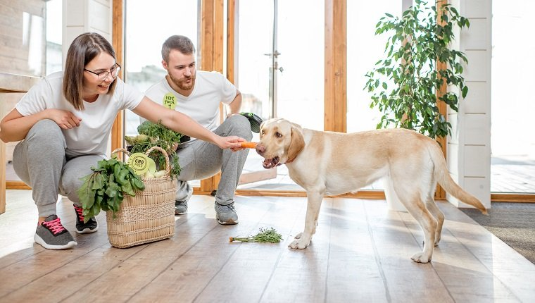 Young couple feeding their dog with healthy green food from the eco market at home