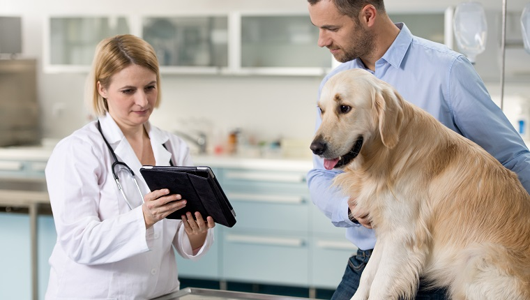 A female veterinarian talking and showing to a dog owner about the pet's health.