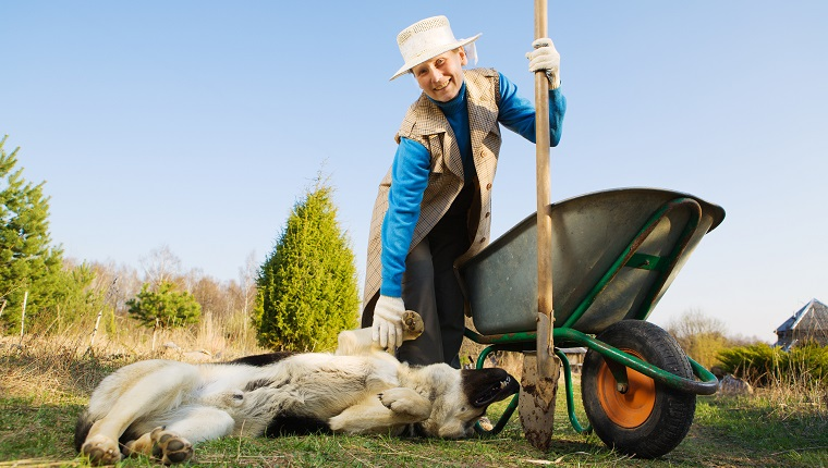 Happy mature woman working at garden and her dog.