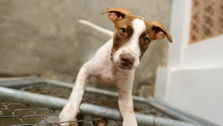 Dog shelter is an animal shelter with a sad cute dog looking up wanting someone to take him home today.