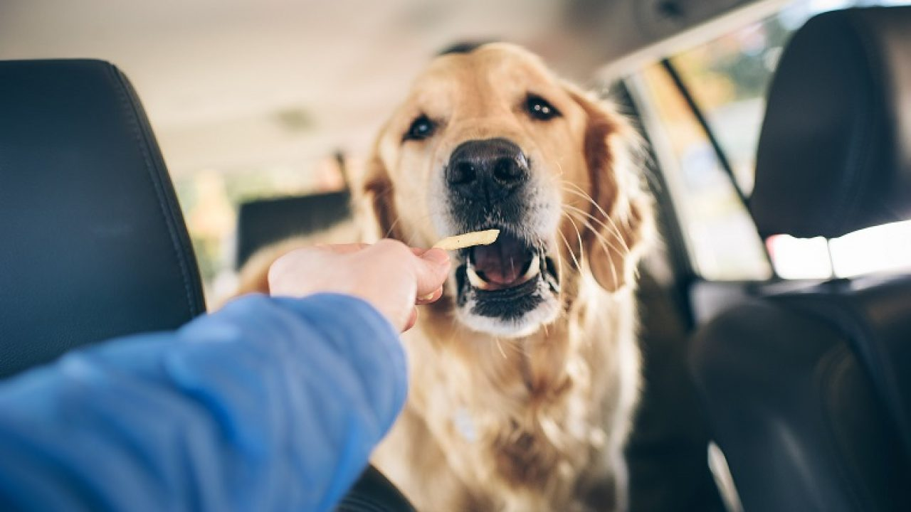 Can Dogs Eat French Fries Are French Fries Safe For Dogs