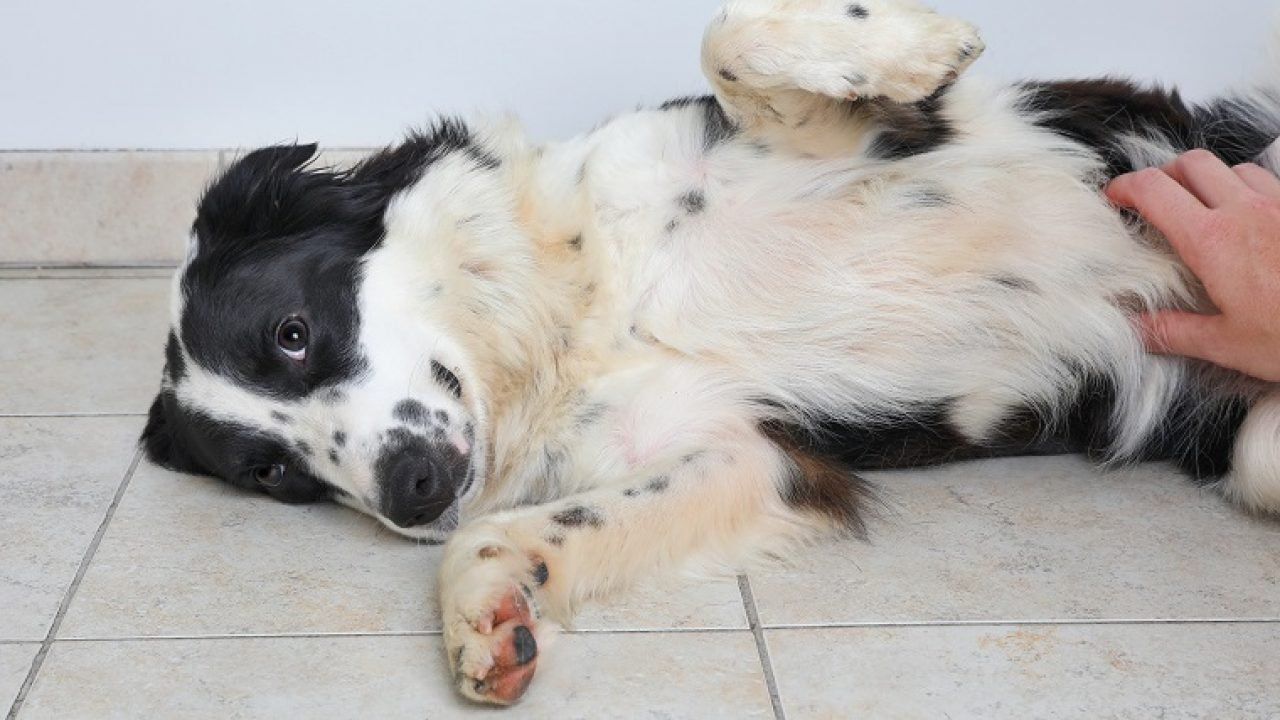 Dear Labby: What Should I Do About My Dog's Stomach Gurgling? - Dogtime