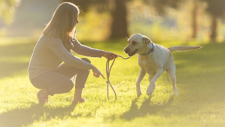 A blonde woman walks her dog in the park on a beautiful summer evening. She is crouching down while holding his leash and pointing to the grass. The sun is setting through the trees.
