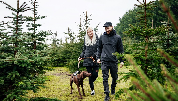 A stylish young couple walking their dog outdoors in pine forest, on the hunt for a christmas tree for their home.