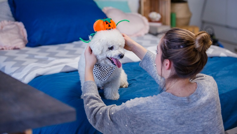 Rear view of a young female putting Jack o' lantern hat on her dog as decoration for Halloween.