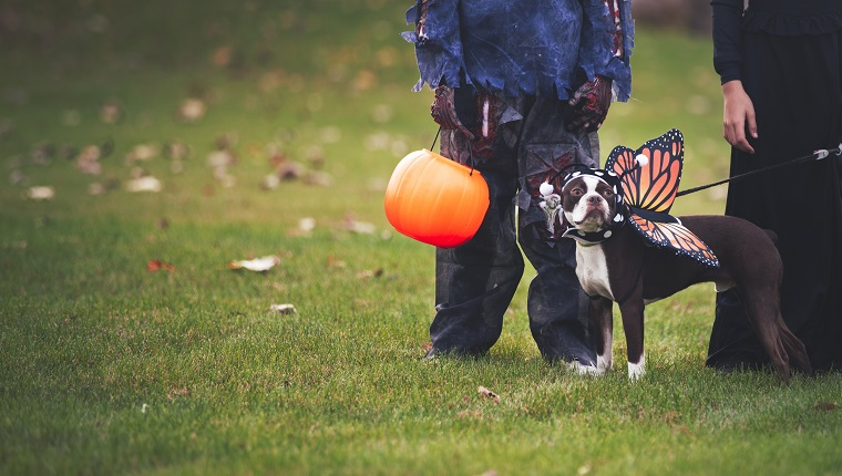Friends in Halloween costumes with dog dressed as butterflyFriends in Halloween costumes with dog dressed as butterfly