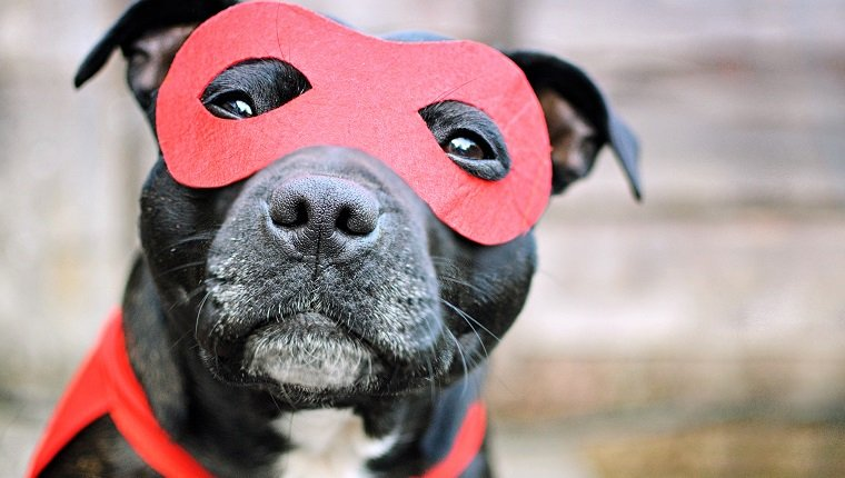 Dog in mask