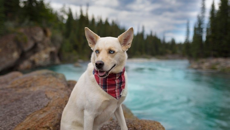 Beautiful mountain backdrop with colorful river. Dog with bandanna on International Bandanna Day.