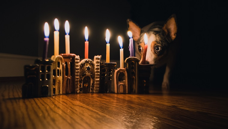 best hanukkah gifts for your dog 2018