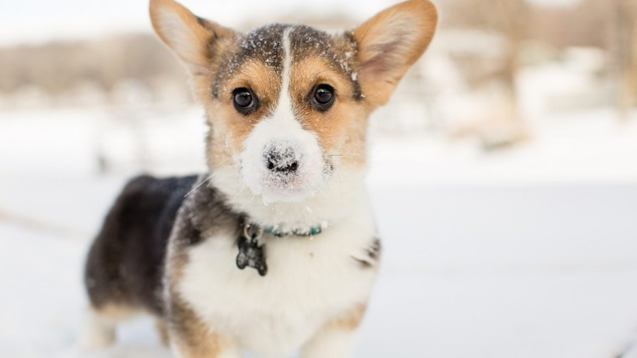 10 Adorable Puppies Playing In Their First Snow [PICTURES] - DogTime