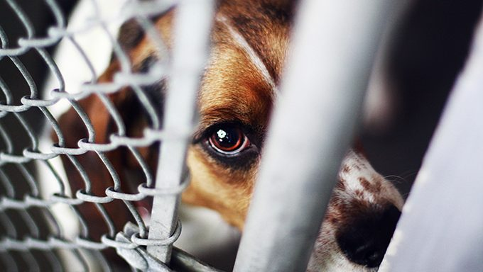 World Kindness Day: 6 Acts Of Kindness You Can Do For Dogs ...