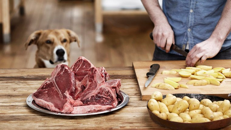 dog eyeing steak and potatoes
