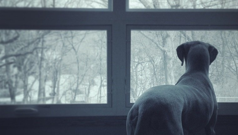 Rear view of a dog looking at bare trees through window
