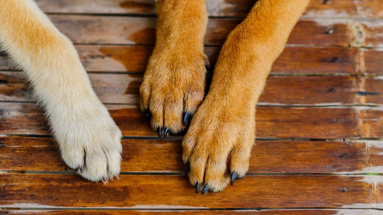 How To Safely Take Paw Prints Of Your Dog's Paws - Dogtime
