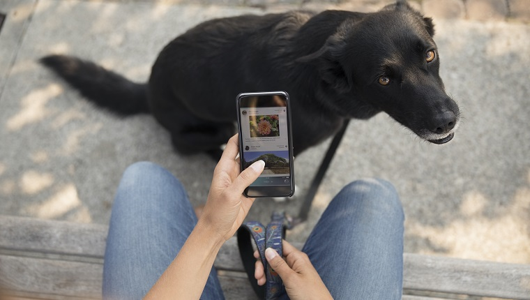 Personal perspective woman with dog using smart phone on bench