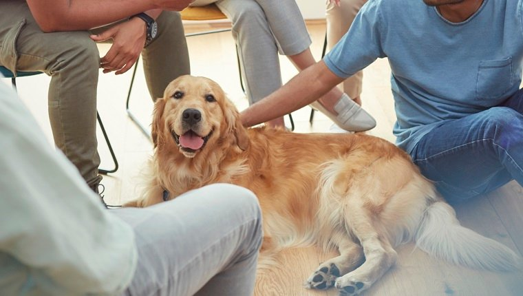People petting dog in group therapy session