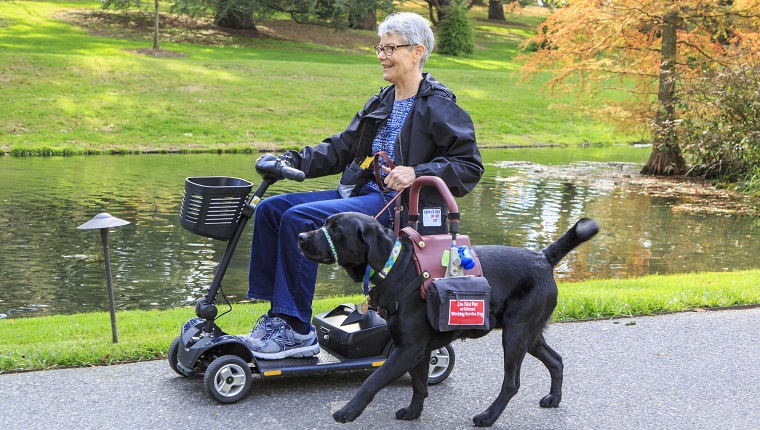 """Recipient and her service dog stroll by a pond at the world famous Longwood Gardens in SE Pennsylvania, USA. Recipient has MS. Junius was trained by Canine Partners for Life in PA, and this team is going through 3 weeks of """"Team Training"""" for newly matched recipients and service dogs."""