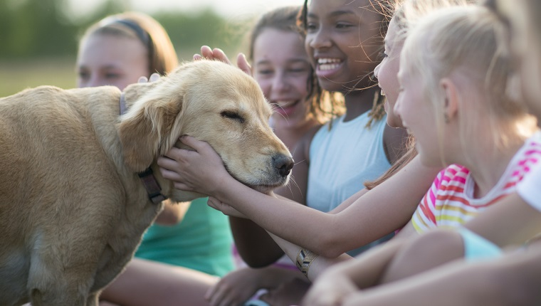 A group of elementary age children are playing with a golden retriever outside at the park.