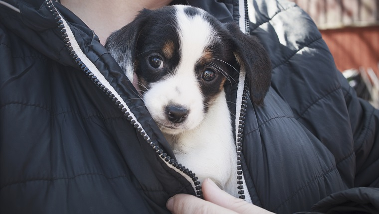 Midsection of person holding puppy under his jacket