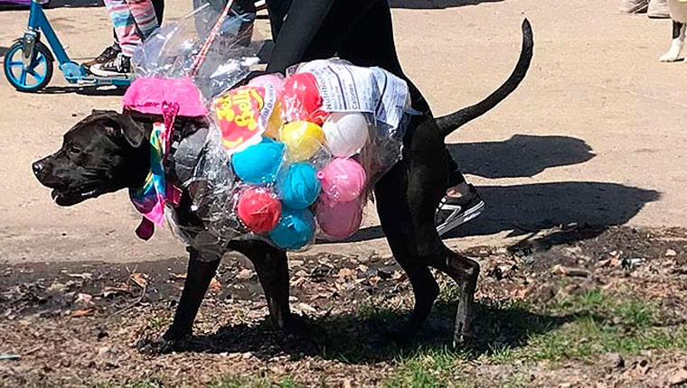 dog dressed as jelly bellies at easter dog parade in chicago's horner park
