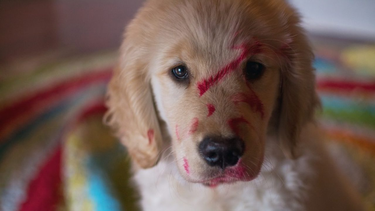Help My Dog Ate Makeup What Should I Do Dogtime